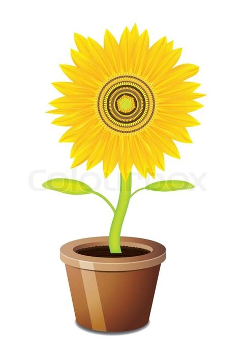 potted sunflower picture more detailed picture about led flower pot gerbera fake flowers sunflower vector pot stock vector colourbox