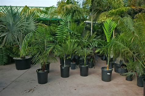 outside plants palm tree nursery san diego california