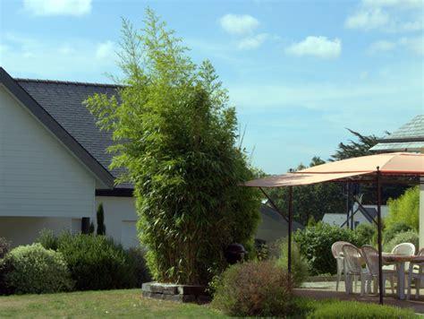 bambus als sichtschutz im kübel bambus sichtschutz auf terrasse balkon bambushecken de
