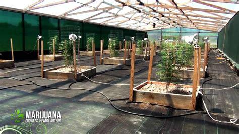 How to grow Marijuana Like a Pro: Big Sluggers 2012