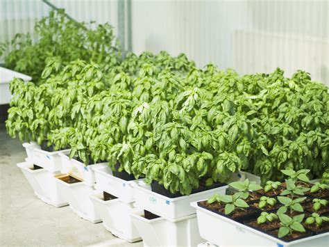 Outdoor Kitchen Ideas On A Budget by Hydroponic Veggie Garden Make