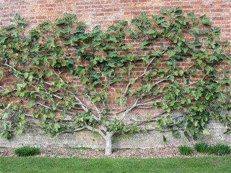 Pflanzen Im Garten by Spalierobst Im Garten Anbauen An Fassaden Und Mauern