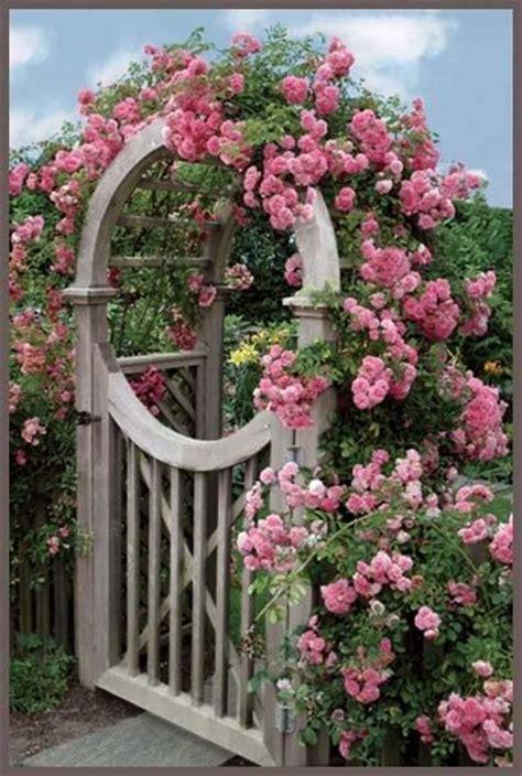 cottage garden arches 219 best images about arbors pergolas trellis on