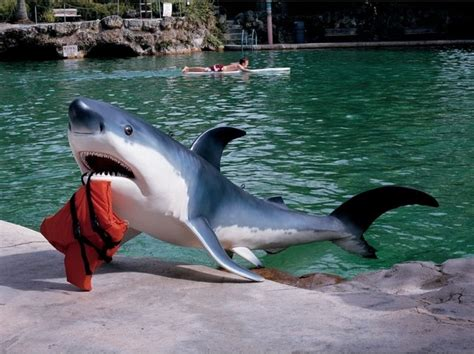 great pool grand great white shark home garden pool sculpture statue