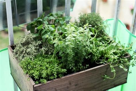 herb garden in farmleigh house walled garden tim austen beautifull herb garden photos