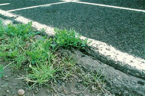 Landscape Fabric Horsetail Ipm Based Landscape Design