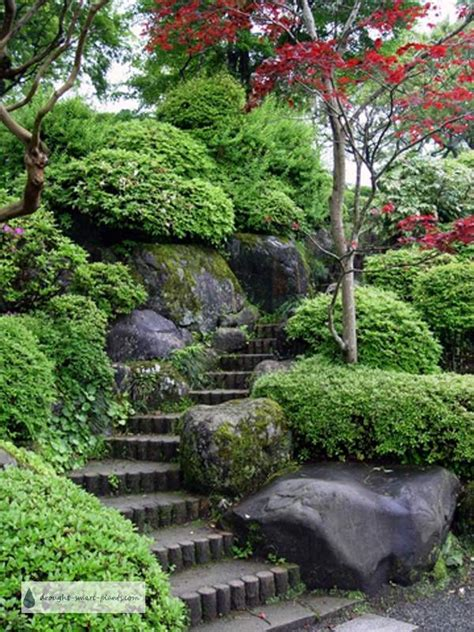 Japanese Rock Garden Plants Japanese Rock Garden Natures Rugged Tamed