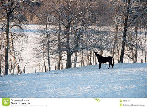 horse outside winter horse stock image image 30725881