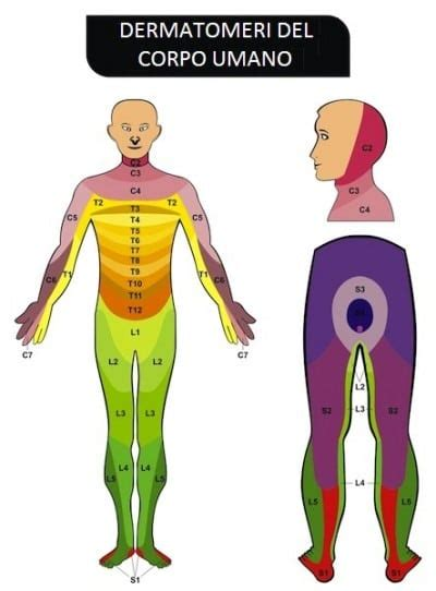 dolore interno coscia inguine cruralgia e lombocruralgia cause sintomi rimedi cura e