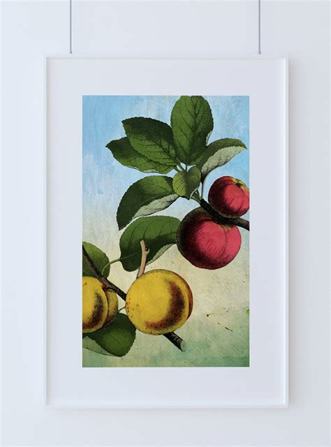 Apple Wall Decor by Kitchen Wall Apple Apricot Print Kitchen Print Food