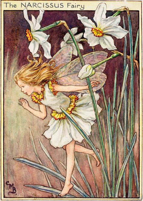 Flower Fairies Of The Garden The Narcissus Flower Fairies