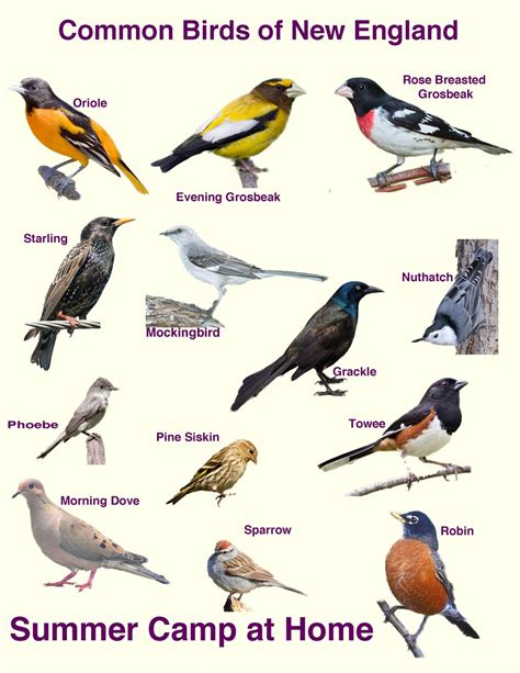 excellent bird feeder birds identification 6 bird feeder