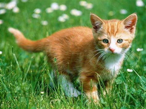 wallpaper background cats cats parrots and butterflies images orange kitten hd