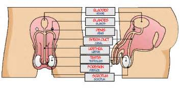 nema l6 30 plug wiring diagram nema get free image about