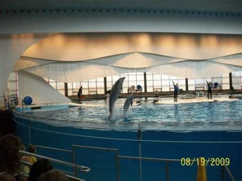duck boat tours baltimore md dolphin show fotograf 237 a de baltimore maryland tripadvisor