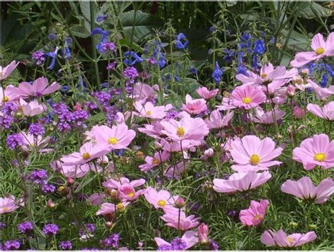 purple flower garden purple flower garden jpg hi res 720p hd