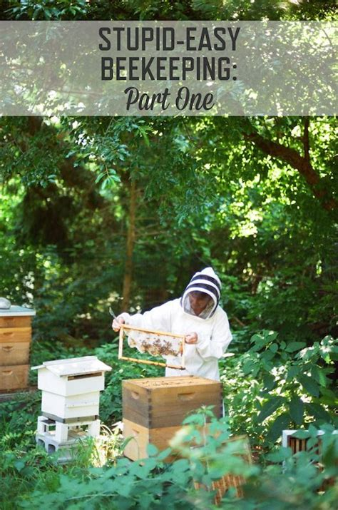 start a beehive in your backyard 17 best images about beekeeping on pinterest bee skep