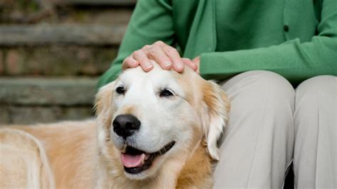 pet   retire starts