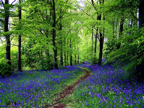 bluebell forest scotland flickr photo sharing