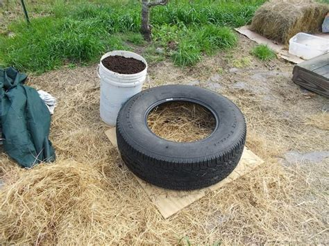 Tire Planters Toxic 17 best images about tire gardens on gardens planters and recycled tires