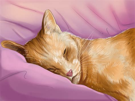 a cat how to choose a cat with pictures wikihow