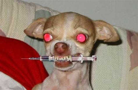 dog needle funny dog pictures entertainment