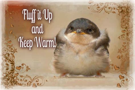 Keeping Warm Like The Swedes Do by Keep Warm Pictures Photos And Images For