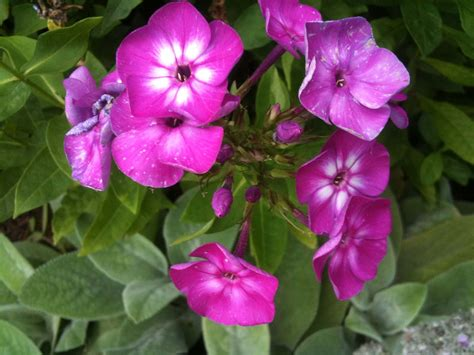 image for flowers the helpful art teacher a garden of flowers blending