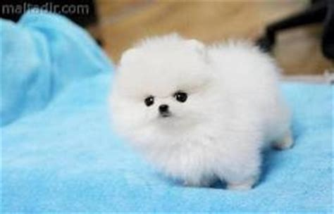 free puppies in henderson ky pets henderson ky free classified ads