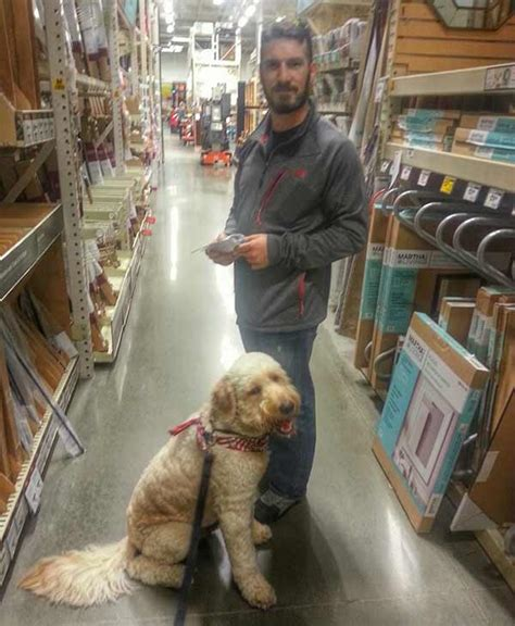are dogs allowed at home depot pets mostly welcome in stores but follow the 6abc