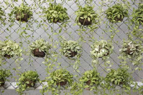 Vertical Garden Plants List Let S Get Vertical A Primer On Vertical Gardening