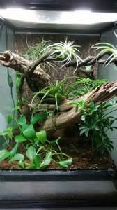 78 best ideas about gecko vivarium on pinterest gecko terrarium reptile terrarium and crested