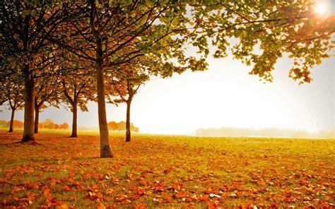 imagenes de paisajes de otoño paisaje soleado de oto 241 o fondos de pantalla gratis