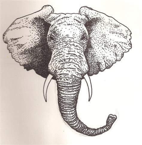 elephant head by scheinberg on deviantart