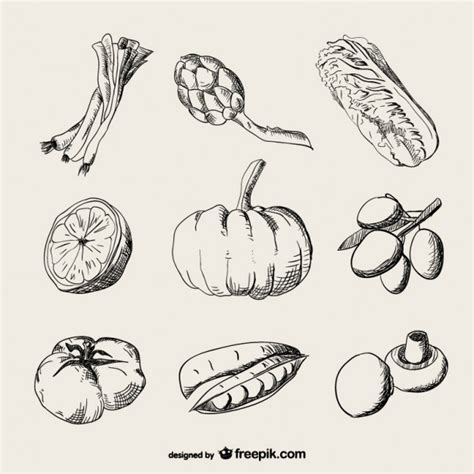 Drawing Vegetables by Realistic Drawing Vegetables Vector Free