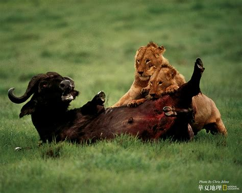National Geographic Wildlife wildlife national geographic 100 best wildlife animal