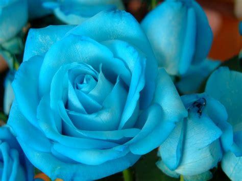 imagenes de rosas azules con movimiento los libros de kayla rosas azules lorena pacheco ebook