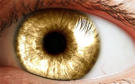 gold eye wallpaper all i know is there is something with the werewolves and