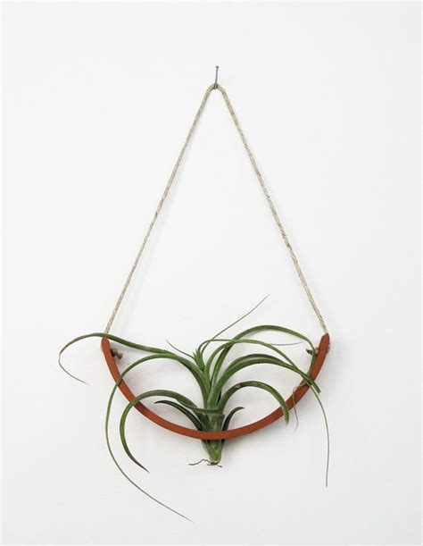 hanging air plant best 25 hanging air plants ideas on pinterest hanging