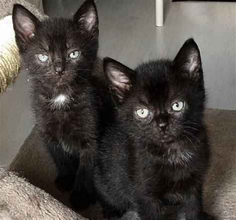 Viele Katzenbabys Suchen Ein Sch 246 Nes Zuhause