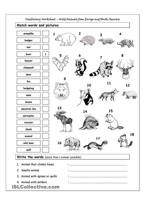 Vocabulary Matching Worksheet - Wild Animals from Europe
