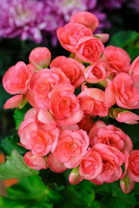 zimmerpflanzen die viel sonne vertragen diese zimmerpflanzen sind schattig und pflegeleicht