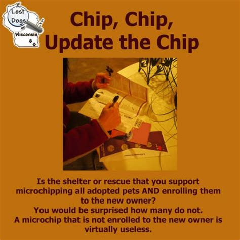 best pet microchip 25 best images about pet microchips on lost