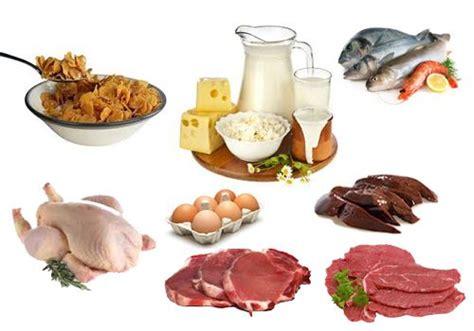 alimentos vitamina b 12 alimentos ricos en vitamina b12 no se animals and sons