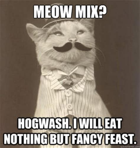 Fancy Feast Meme - meow mix cat meme cat planet cat planet