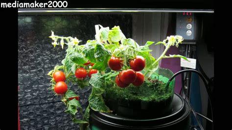 liter bottle  watering planter quick easy diy