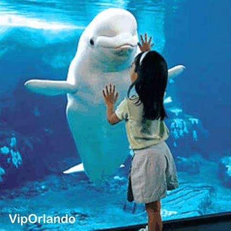 imagenes de animales orando seaworld orlando thematic park of sea 180 s animals parques