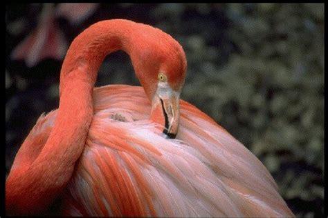imagenes de animales endemicos republica dominicana un hermoso pais taringa