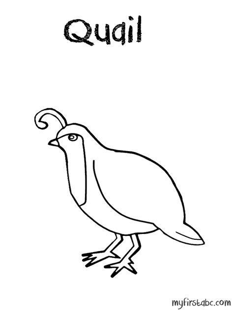 coloring pages for quail free coloring pages