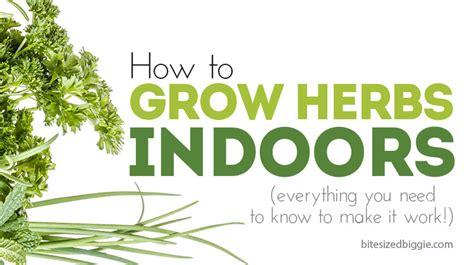 how to grow herbs how to grow herbs indoors